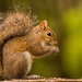Bushy Tail and a Squirrel! by rickster549