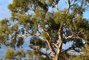 18th Mar 2019 - Grand Old Tree