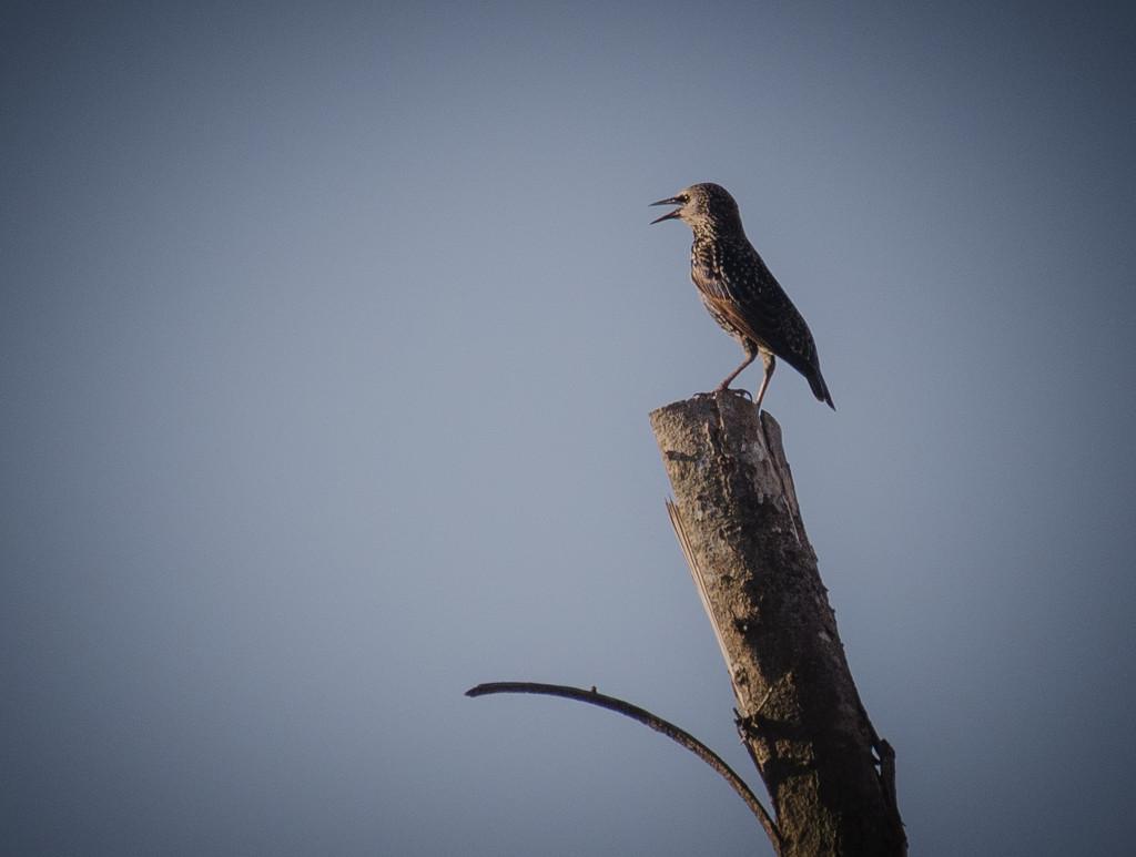 Bird by salza