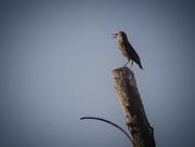 17th Mar 2019 - Bird