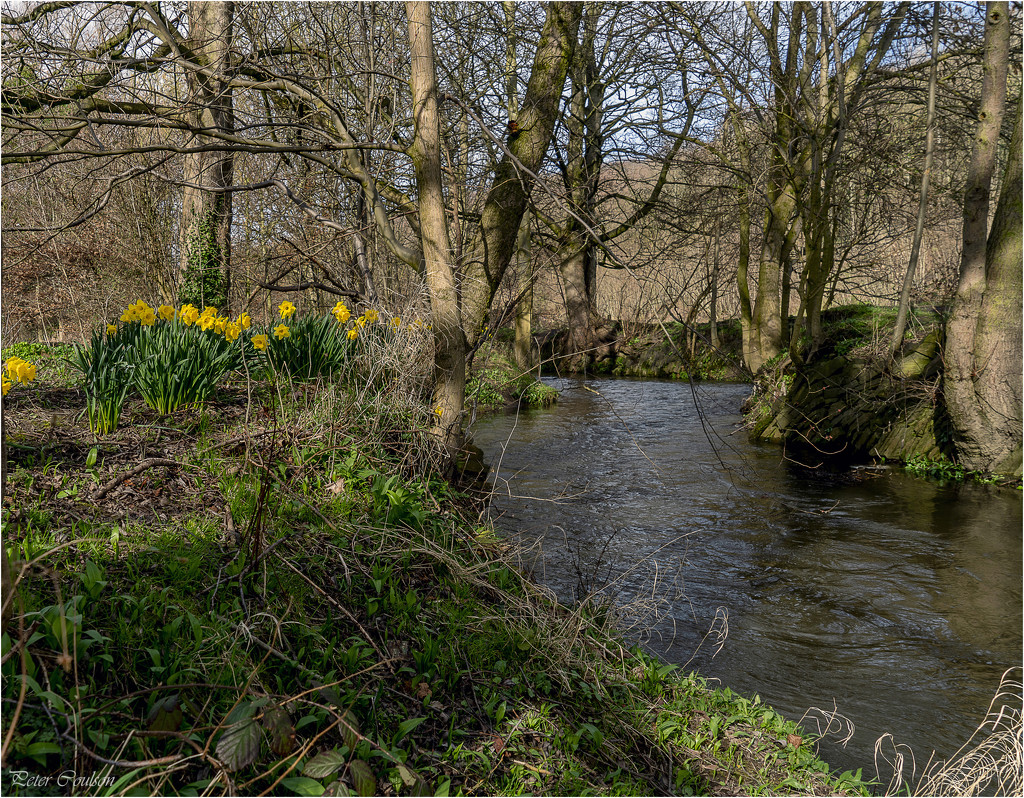 Along the Stream by pcoulson