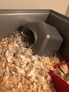 14th Mar 2019 - Demolition Hamster