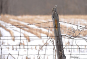 18th Mar 2019 - The barbed wire fence!