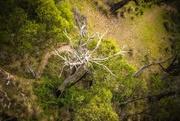 19th Mar 2019 - Magic tree