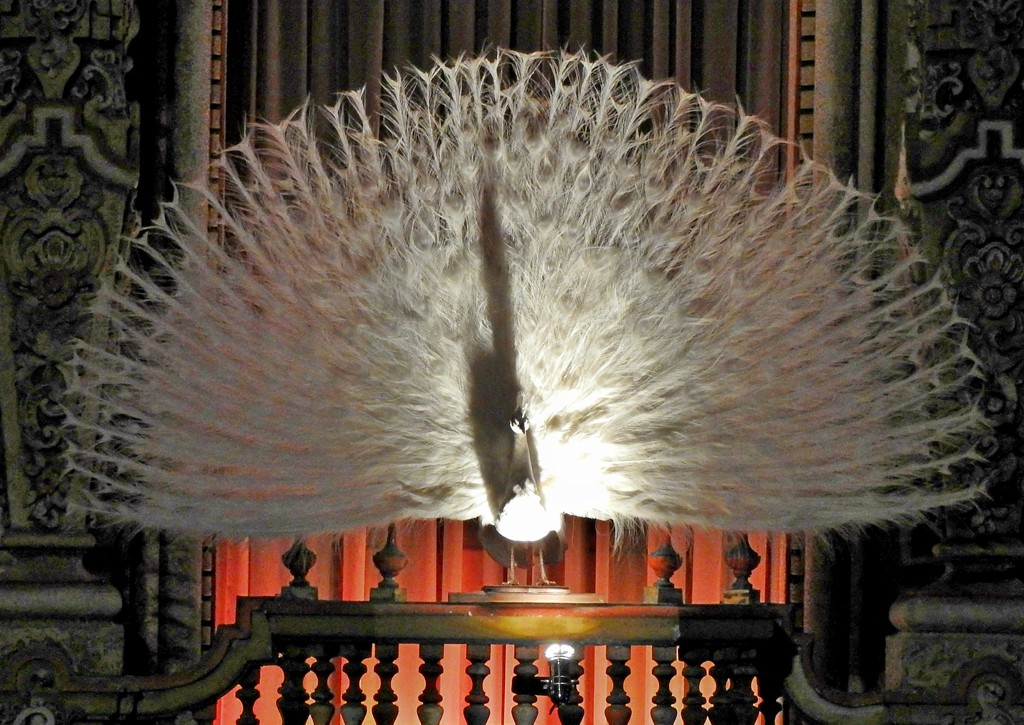 White Peacock, Majestic Theater, San Antonio, Texas by janeandcharlie