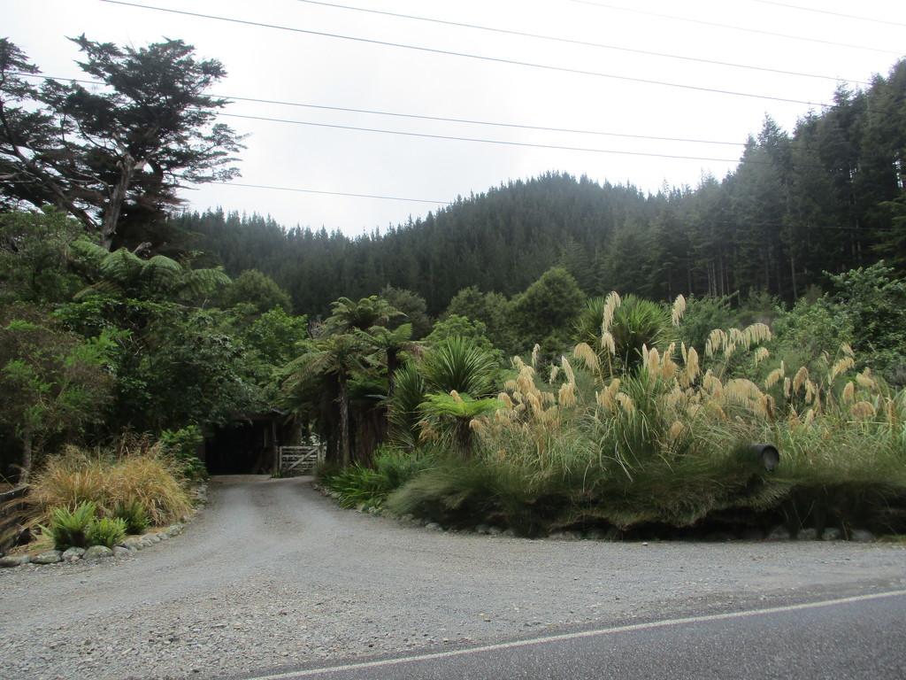 Beautiful bushland    North Island  NZ by 777margo