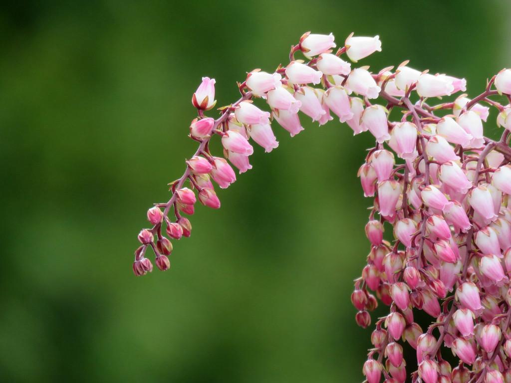 More Pre-Spring Blooms by seattlite