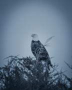 16th Mar 2019 - moody eagle