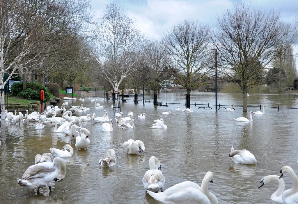 Flood by rosie00