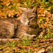 Feral Cat Enjoying the Sunshine!