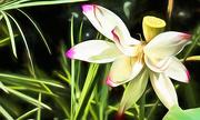 20th Mar 2019 - Lotus blossom