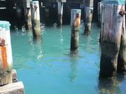 22nd Feb 2019 - Wellington waterfront