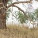 bush tree