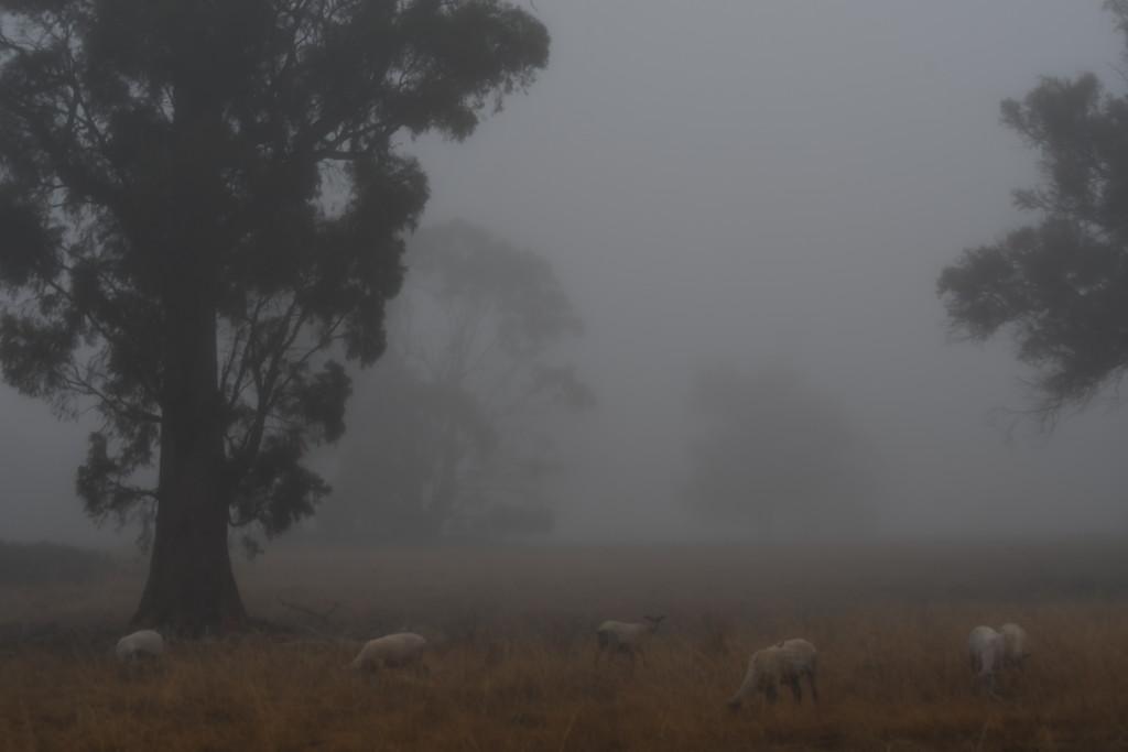 Morning Fog #1 by kgolab
