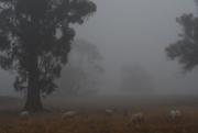 20th Mar 2019 - Morning Fog #1