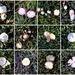 Autumn Mushrooms ~