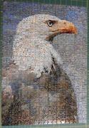 18th Mar 2019 - Eagle puzzle complete