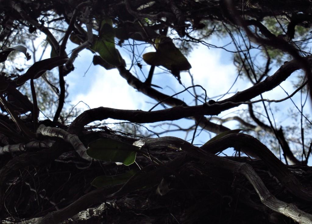 From below.. by thedarkroom