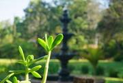 7th Mar 2019 - Green in the Garden
