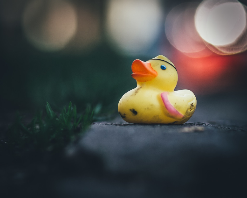 Duck on a Curb by mamazuzi