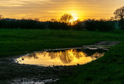20th Mar 2019 - The Golden Puddle