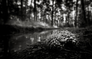 20th Mar 2019 - Pine Cones on the Forest Floor...