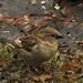 Sparrow anomaly