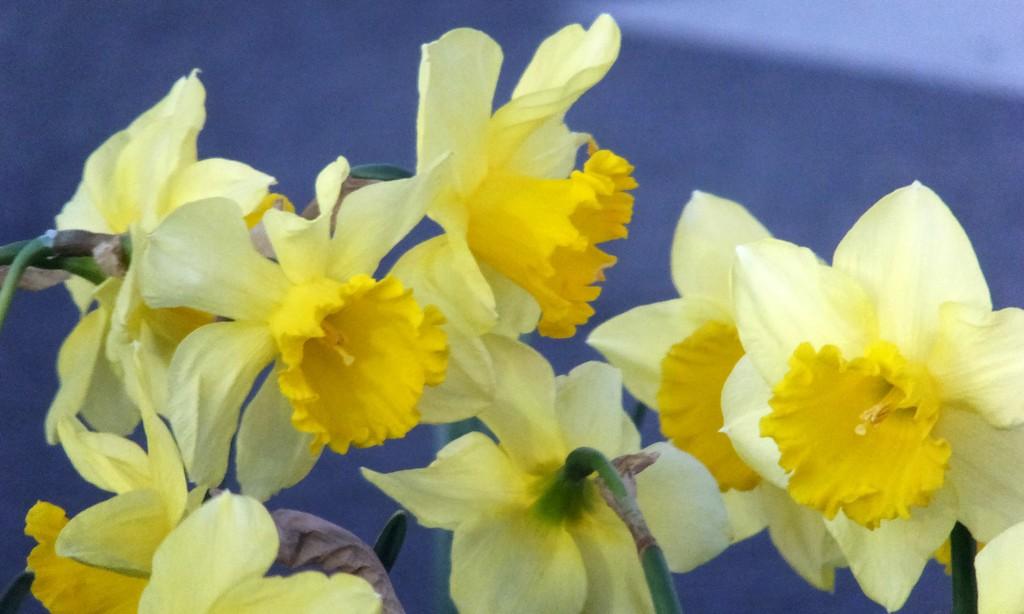 Springtime by linnypinny