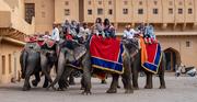 22nd Mar 2019 - Jaipur: Amber Fort: elephants