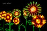 20th Mar 2019 - Sunflower Lanterns