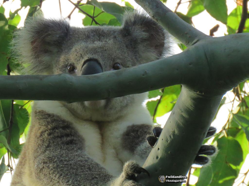 good as a mask by koalagardens