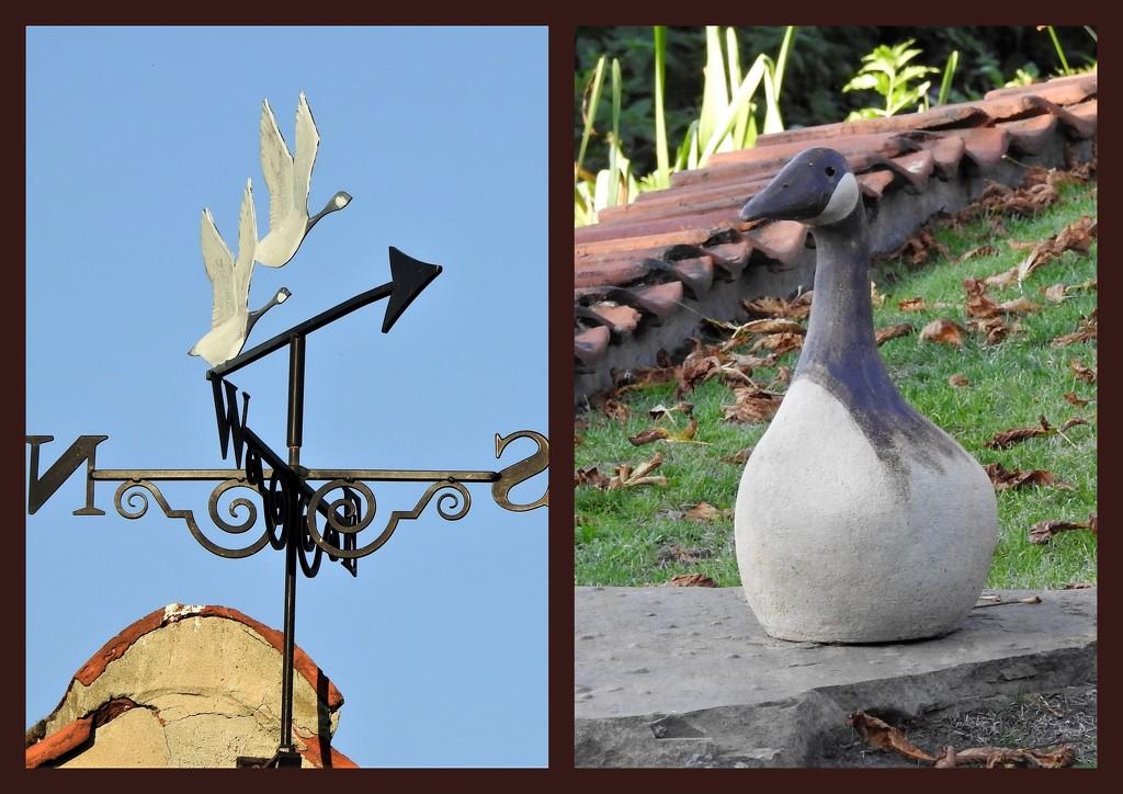 Canada Geese Caythorpe by oldjosh