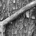 Branch and Bark
