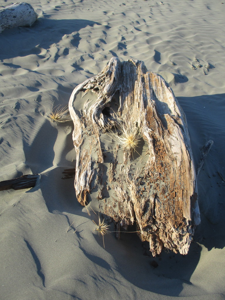 Washed up on Waitarere Beach  NZ by 777margo