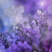 """24th Mar 2019 - 2019-03-24 Rainbow month """"violett"""" N°4"""