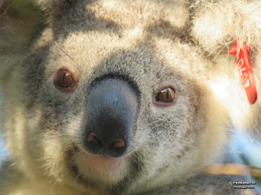 bright eyes ... by koalagardens