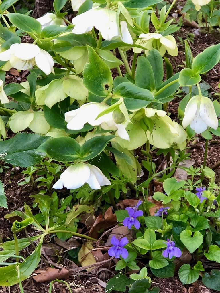 Spring flowers by nicolaeastwood