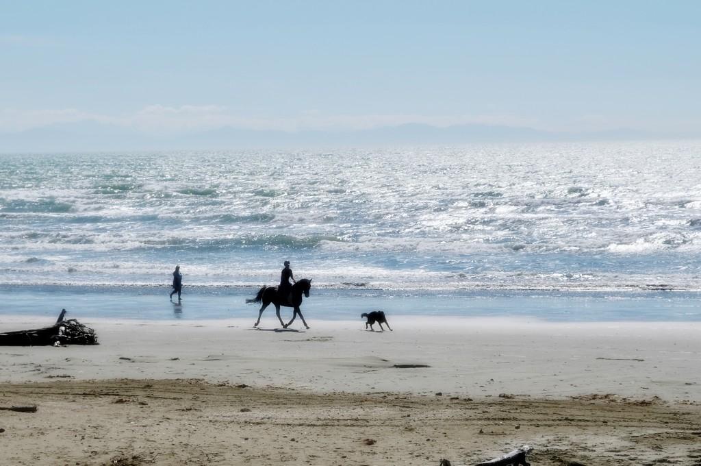 Seahorse by maggiemae