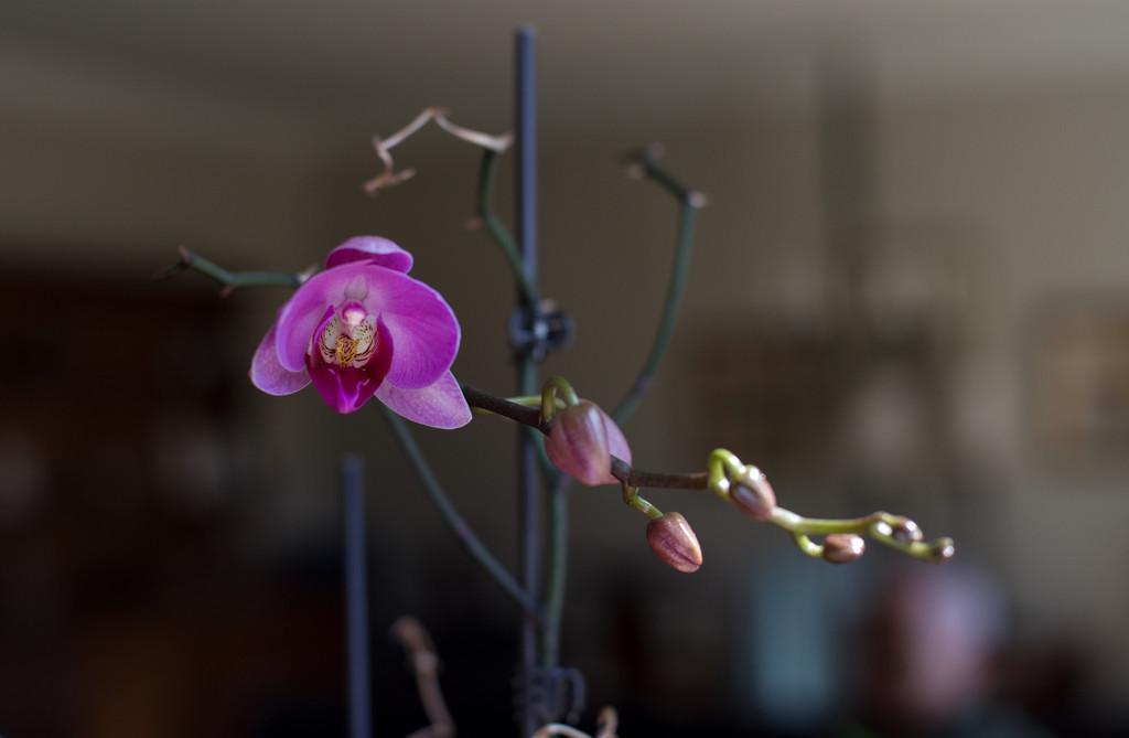 Finally Blooming! 2 by loweygrace