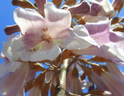 24th Mar 2019 - Inside the empress flower