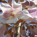 Inside the empress flower