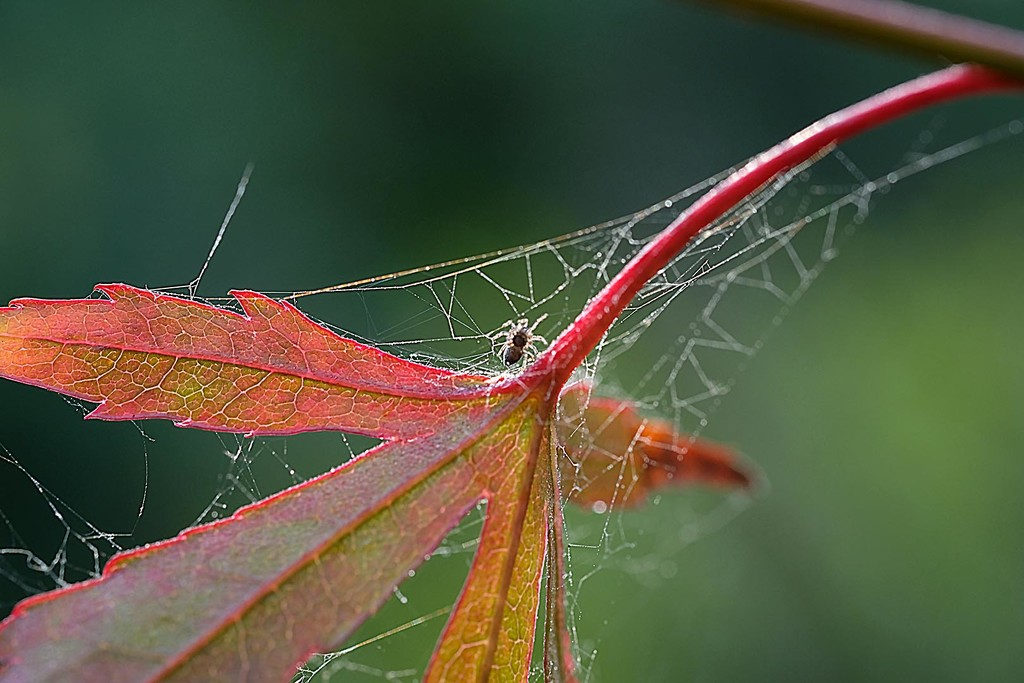Tiny autumn spider and web by maureenpp