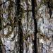 bark macro