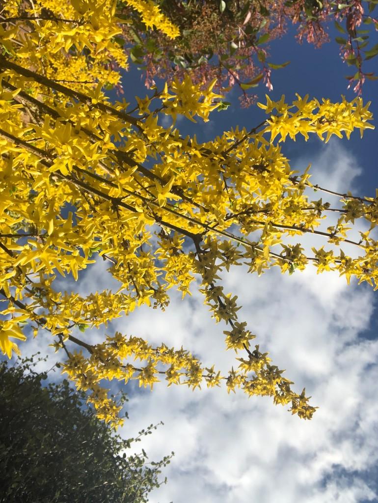 Spring by nicolaeastwood
