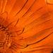 Orange glass - day 26