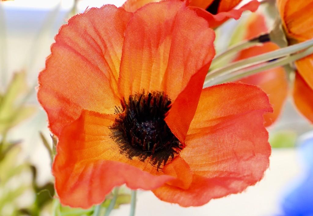 Orange Poppy by carole_sandford