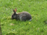 26th Mar 2019 -  Bunny by the Canal