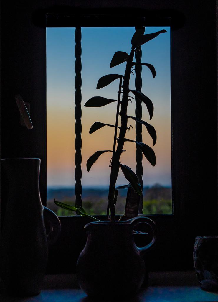 Twilight Quarantine by vignouse