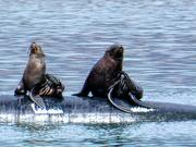 27th Mar 2019 - More Seals