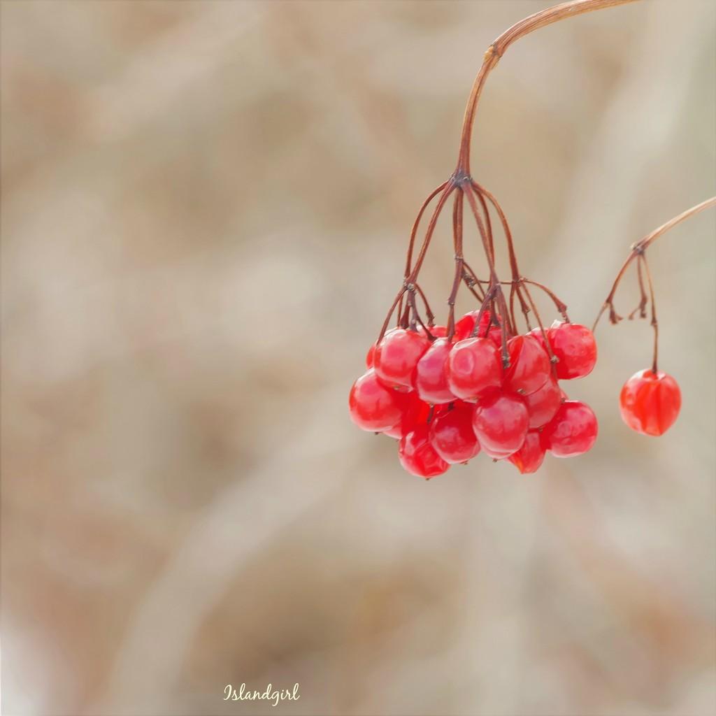Berries by radiogirl